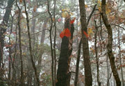 Thumbnail: Hot Springs National Park - Two Red Leaves